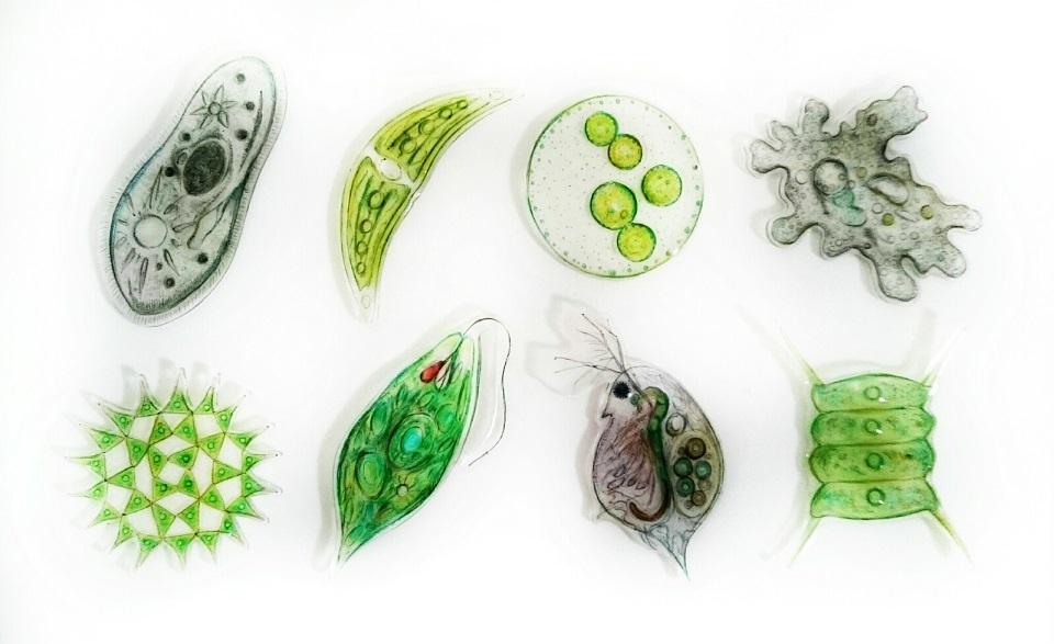 2017_ガクタメ_魅惑の微生物_01