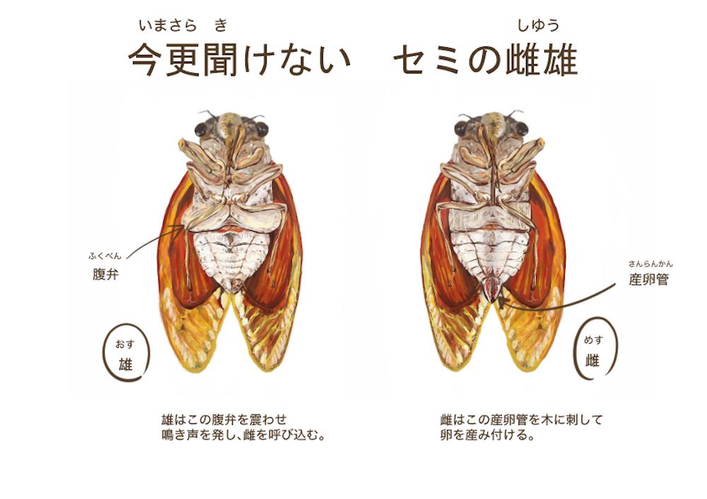 2017_ガクタメ_蟲紙_01