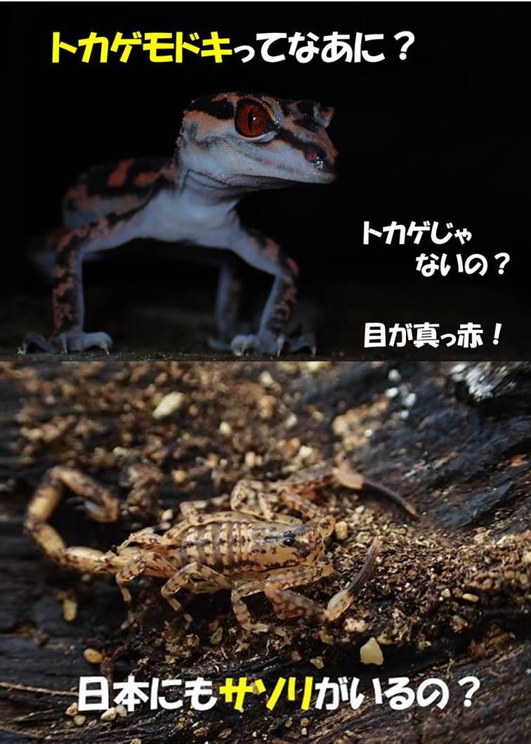 2017_ガクタメ_あまびこぷらねっと_β01