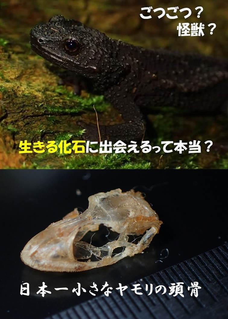 2017_ガクタメ_あまびこぷらねっと_β02