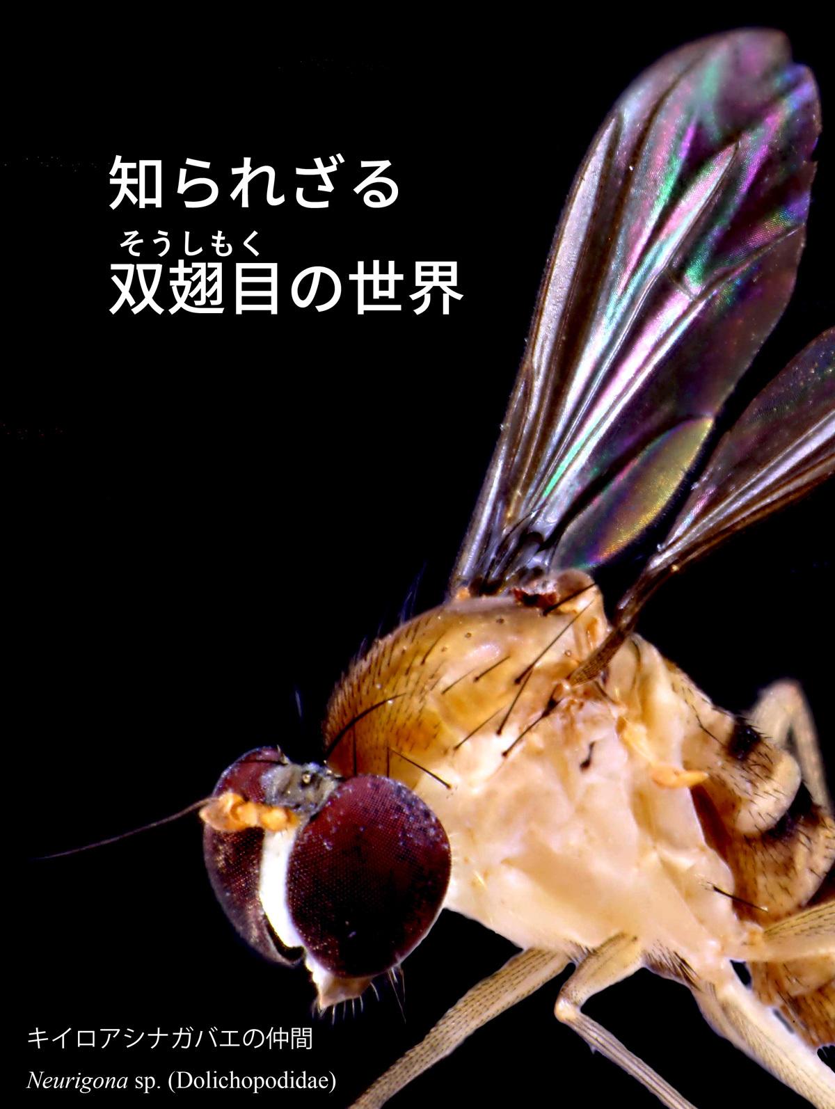 2017_ガクタメ_ニッチェ・ライフ_01