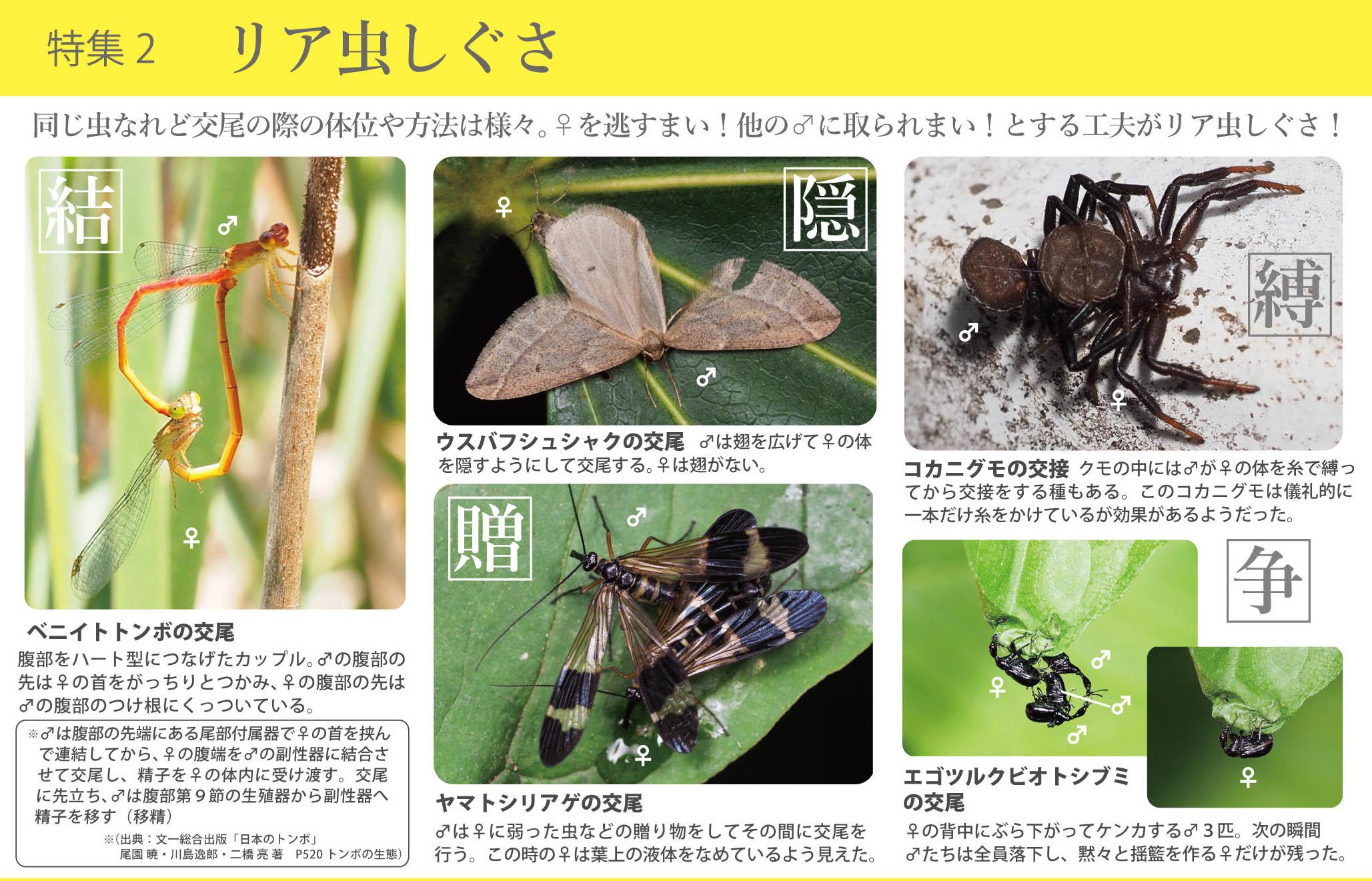 2017_ガクタメ_日本野虫の会_02