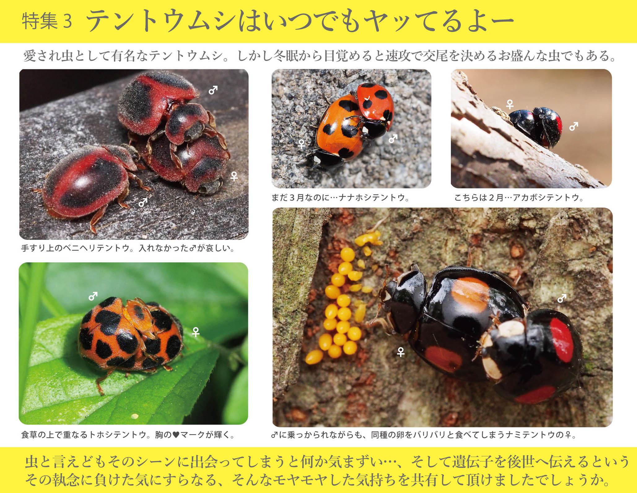 2017_ガクタメ_日本野虫の会_03
