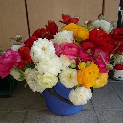 20170510花