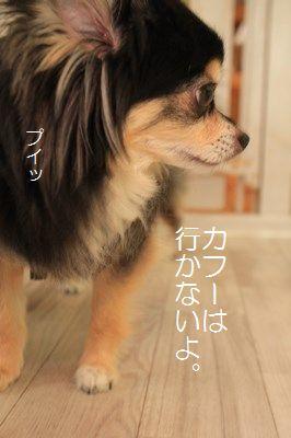 s-IMG_0011.jpg