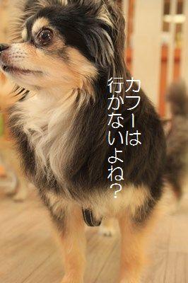s-IMG_0012.jpg