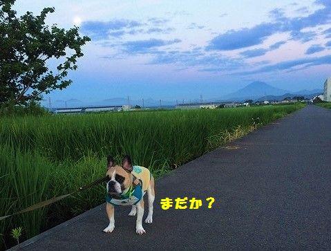IMG_4387 (2)