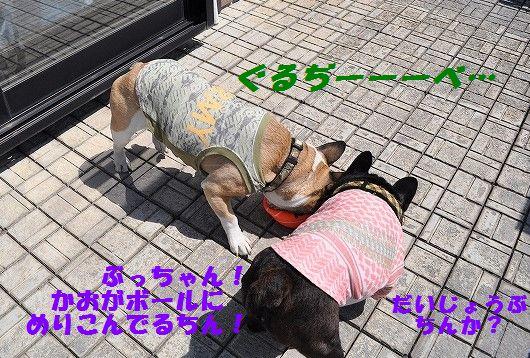 DSC_0368_20170525100408966.jpg
