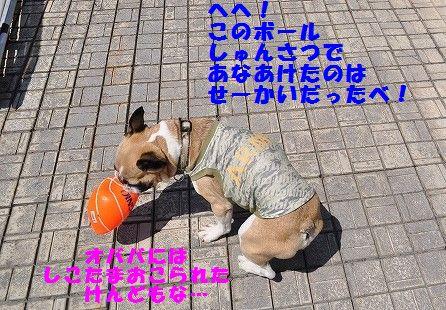 DSC_0370_20170525100411f3e.jpg