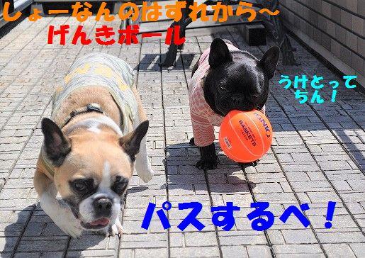 DSC_0389_20170703095234d94.jpg