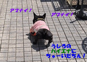 DSC_0393_20170526123606620.jpg