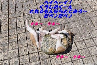 DSC_0401_201705291025136a9.jpg