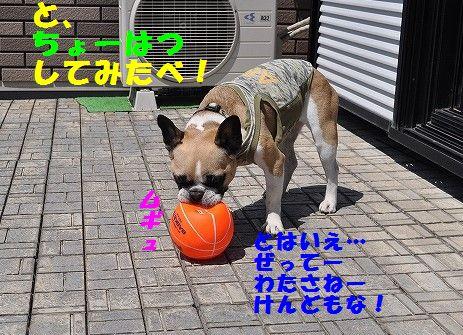 DSC_0402_20170529102514a5c.jpg