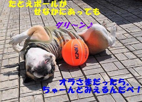 DSC_0407_201705291025201dd.jpg
