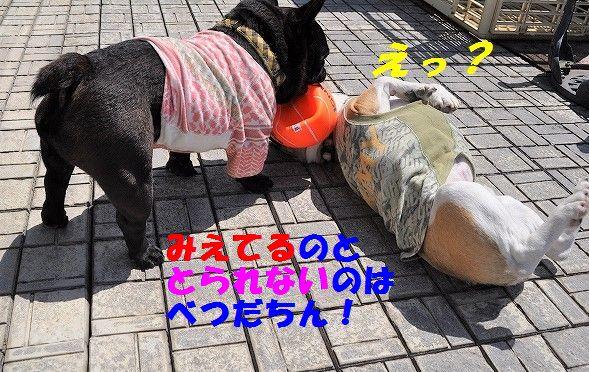 DSC_0410_201705291025231d6.jpg