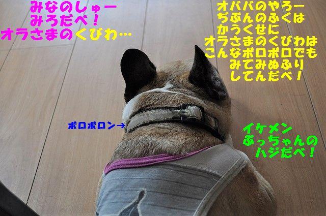 DSC_0444_201705150945468a3.jpg