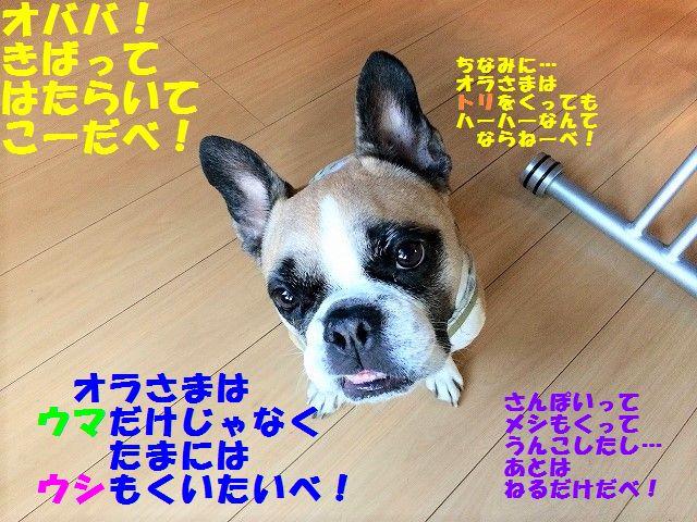 FullSizeR_20170712094648c63.jpg