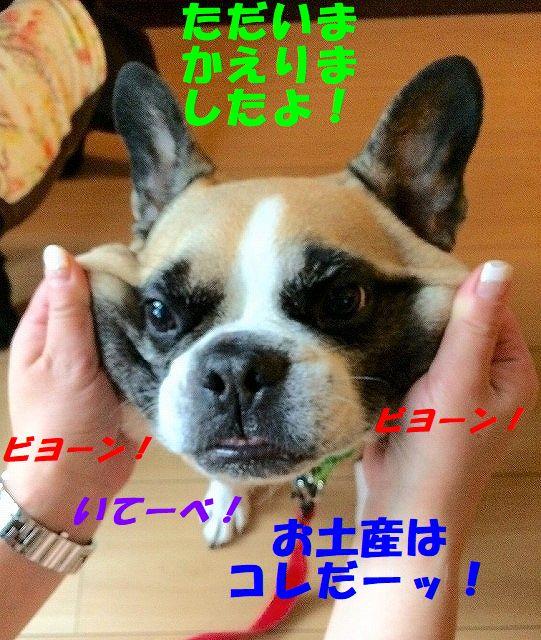 FullSizeR_20170901101137049.jpg