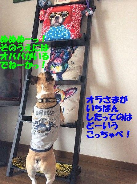 IMG_2248_20170509145746ee1.jpg