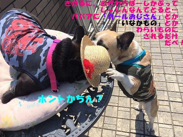 IMG_2701_20170523145634b0b.jpg