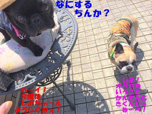 IMG_2702_2017052314563587d.jpg