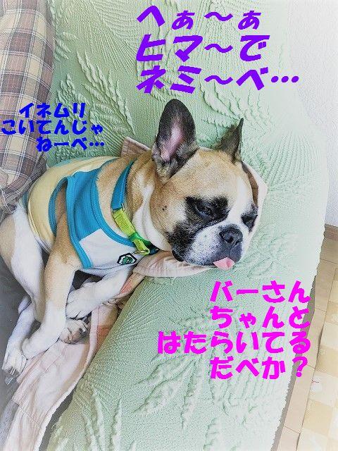 IMG_3203_20170616141134ecd.jpg