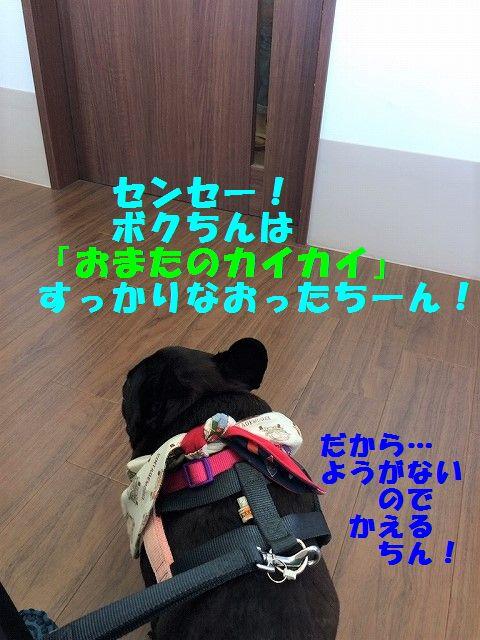 IMG_3722.jpg