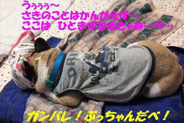 IMG_4359_20170807150403b87.jpg
