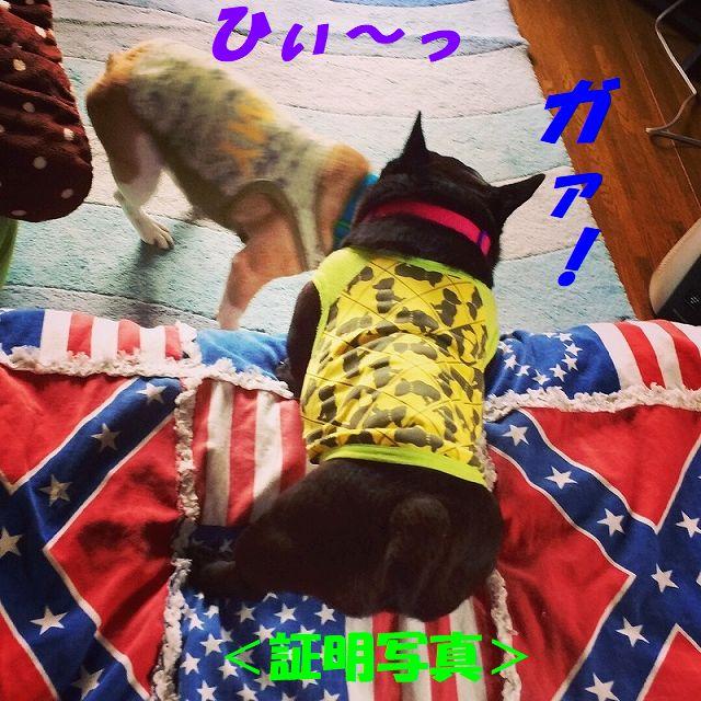 IMG_4464_201708180856033c1.jpg
