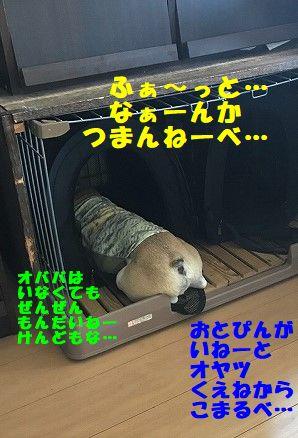 IMG_5280.jpg
