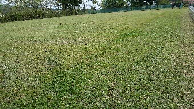 キレイになった芝畑