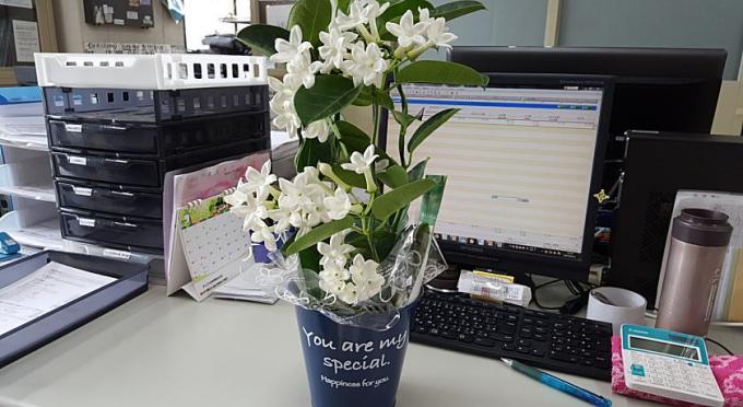 オフィスに届いたジャスミンの花