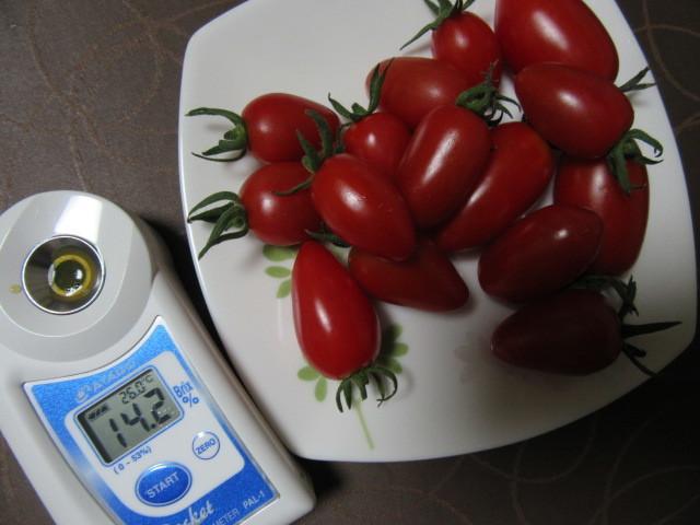 今日のトマト