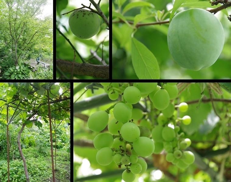 IMGP9602-horz-vert.jpg