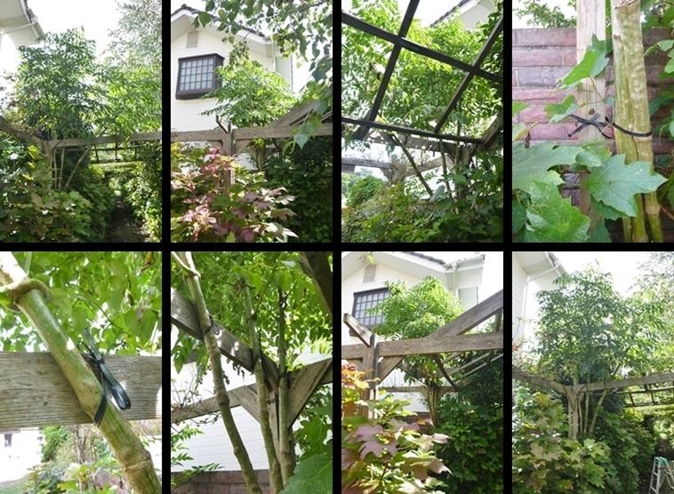 P2190030-horz-vert.jpg