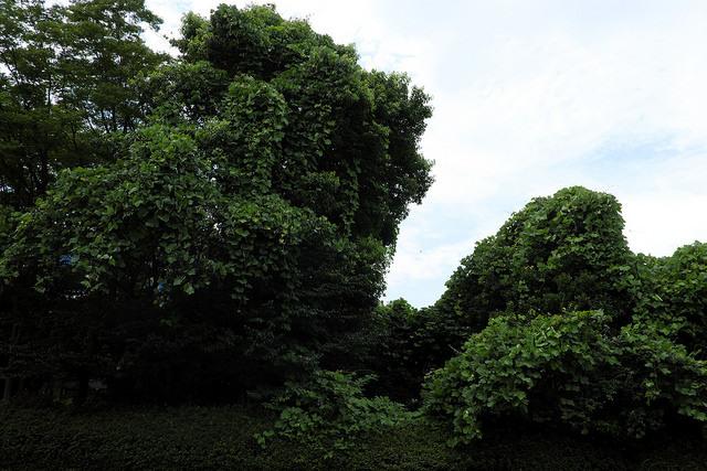 新横浜元石川線002