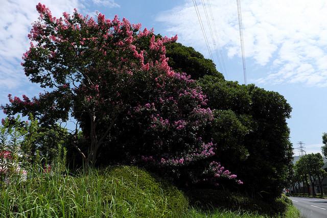 新横浜元石川線003