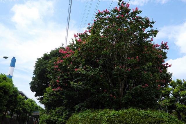 新横浜元石川線005