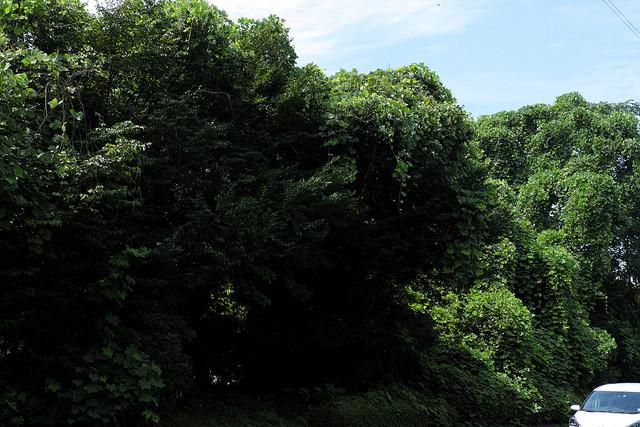 新横浜元石川線007