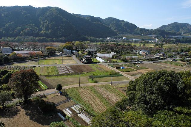 相模川大島002