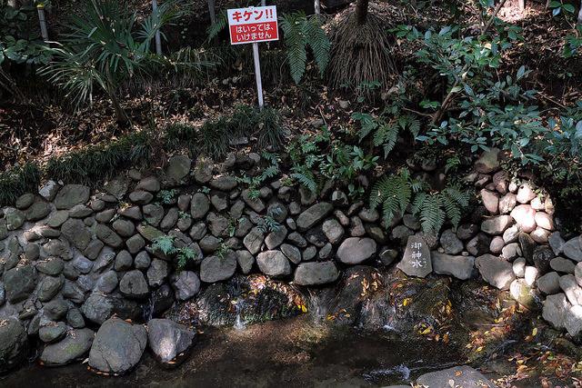 相模川大島004