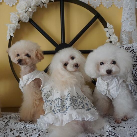 3姉妹バルーンB