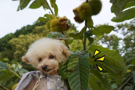 葉が大きい