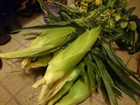 0716収穫6.JPG