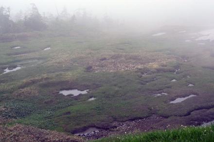 苗場山頂湿原