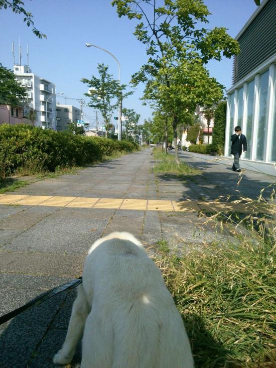 散歩1(2017-5-31)_convert_20170531204855