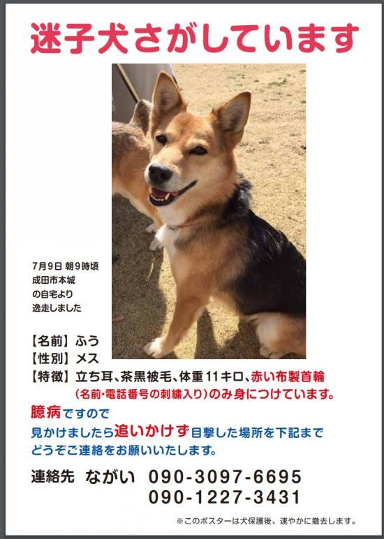 ふうちゃん、迷子_convert_20170710132200