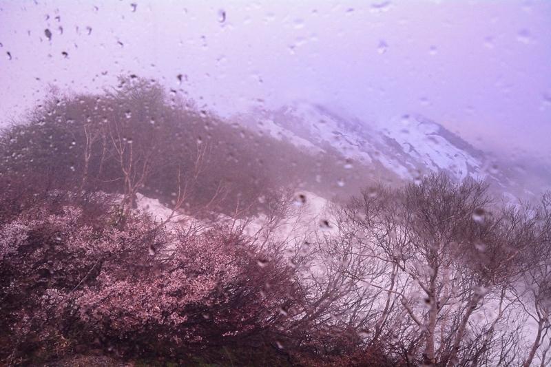 20170528 mikunigoya sakura