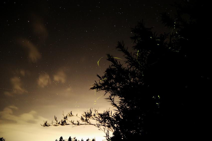 20170719蛍の光跡と星2