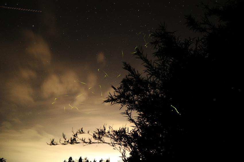 20170719蛍の光跡と星3